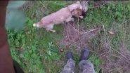 Три разных выстрела по фазанам