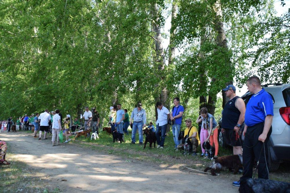 Выставка собак охотничьих пород. Томск 2016