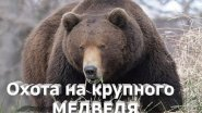 Охота на крупного медведя