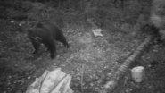 Медведица  с медвежатами на приваде