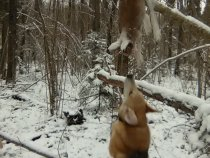 Первый беляк по первому снегу