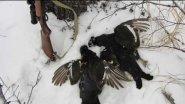 Охота на тетерева зимой.