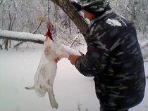 Мороз под 30 охоте не помеха.