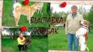 Выставка охотничьих собак. Омск-2015