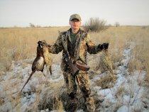 Утром по фазану