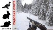Ходовая зимняя охота. Рябчик, заяц и бобер не пострадали.