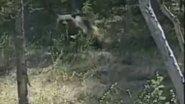 Встреча с медведем))