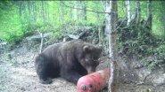 Xозяева тайги. Василий Шумихин.  Охота на медведя.