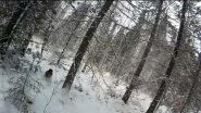 Экшн без монтажа №22. Охота на рябчика поздней осенью.