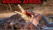 Удивительная Африка Охота Видео
