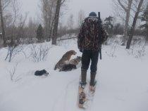 Собакам тоже лыжи нужны!