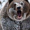 Убив медведя, браконьер сфотографировался с ним и выложил в соцсети