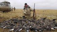 Охота на гуся в Карелии. Как добывают дичь!