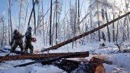 Выруб наших Сибирских лесов, наша Тайга! Всё Китайцам...