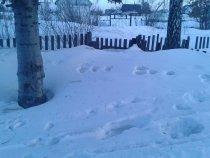 Съездил на дачу снег покидать.Эх раньше бы знать.