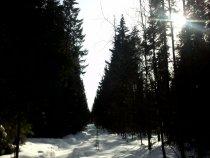 Утро пермском лесу