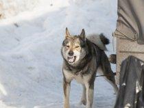 25 Марта 2017 г. Выставка собак охотничьих пород, Осинники.