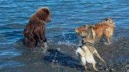 Уральская охота на Медведя!