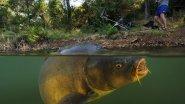 Рыбалка на Карпа! Ловля настоящих рыбаков.