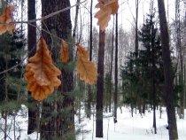Мартовский лес.