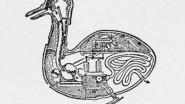 Утка робот (модернизация чучалок)