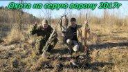 Охота на серую ворону 2017. Охота на серую ворону в Украине. Crow hunting 2017.