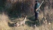 Сибирь. Охота на Косулю.