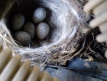 Гнездо в машине