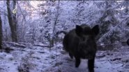 Охота зимой с лайками