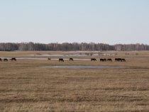 Лошадки у разлива