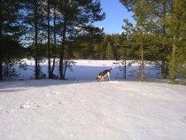 пейзаж с собакой..