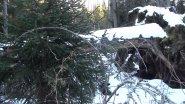 На медведя на берлоге с… лестницей и камерой