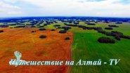 Летом в поле на Алтае. Глазами дрона.