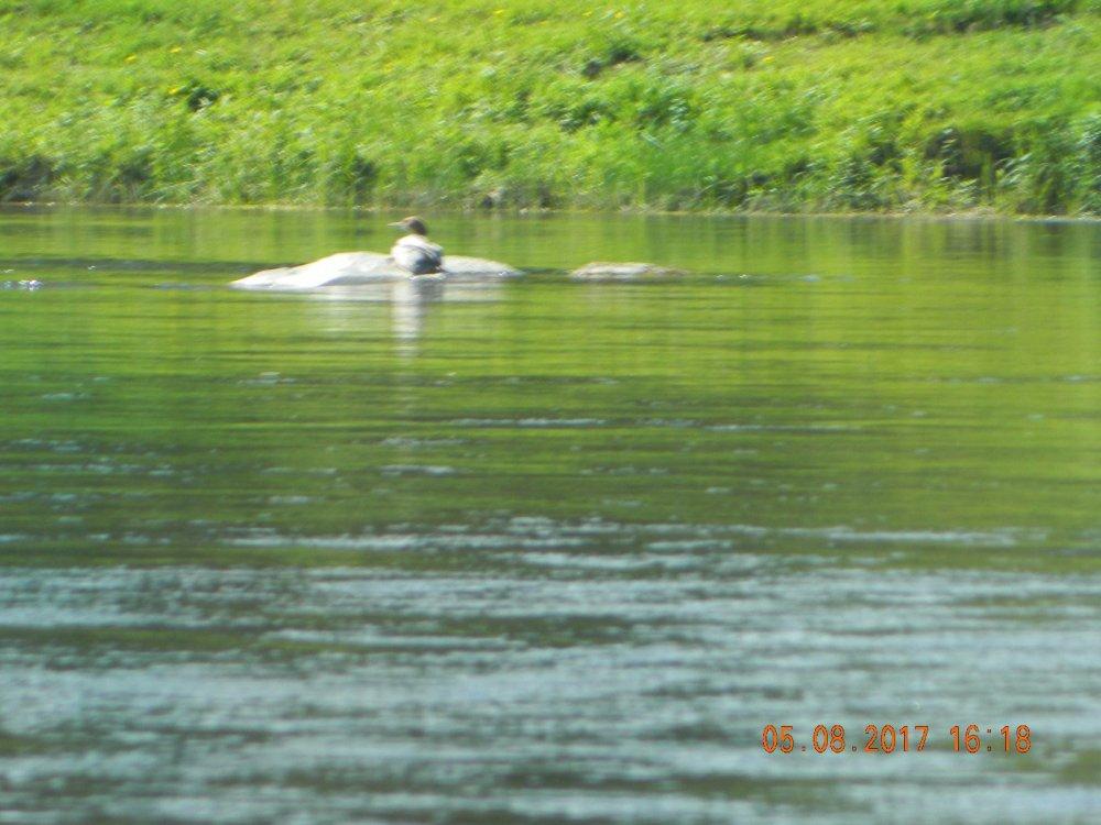 рыбалка на сибирских реках сплавом
