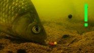 Поклевки получи Поплавочную удочку из двух камер. Рыбалка. Ловля карася сверху поплавочную удочку.fishing