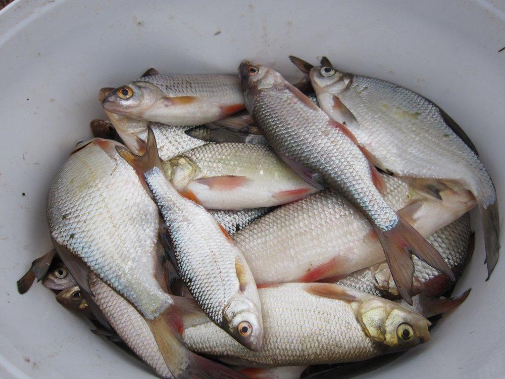 Рыбалка на реке Москва