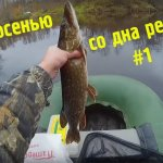 Щука осенью Pike in the fall