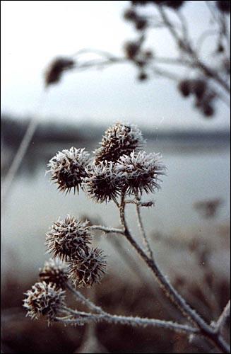 Вятский камешек.Ноябрь-2002 (лист3)