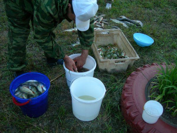 Вода высокая, крупняк не активен. За 2 суток на 4 спина ок. 5 ведер окуня и щучки.