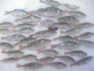 Идеальная рыбалка (за целый день ни одного конкурента)