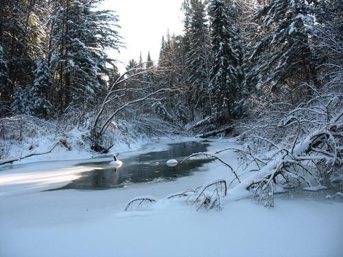 зимняя таежная сказака 3