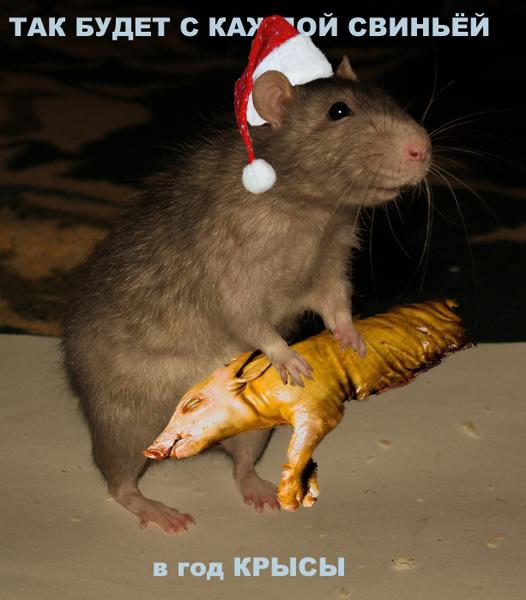 Крыса стреляет в свинью открытка