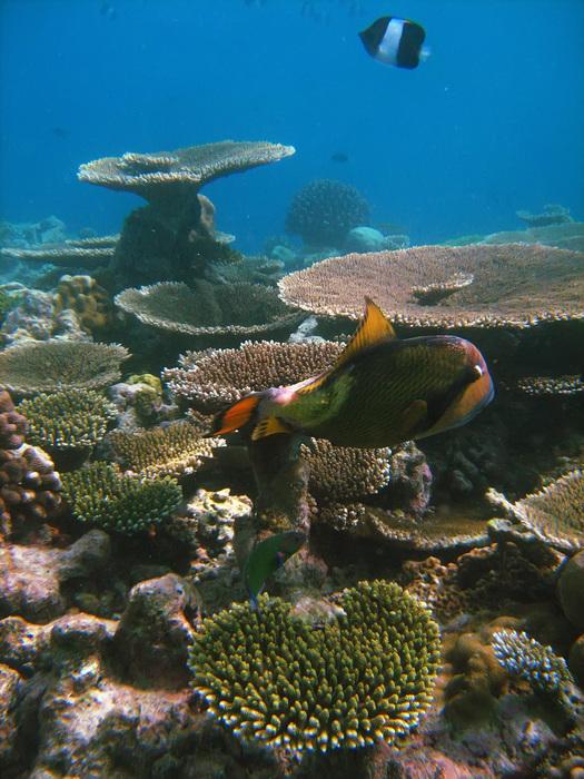 Мальдивы. Подводный мир.