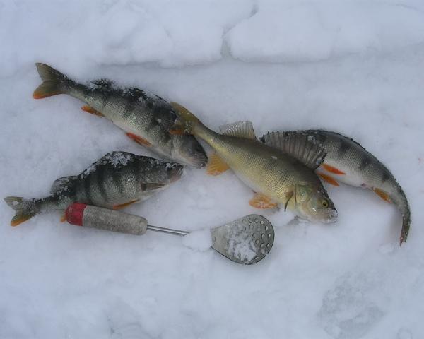 Рыбалка зимняя в новосибирске