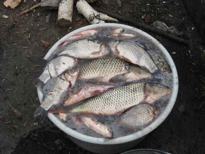 отчеты о рыбалке на озере сартлан