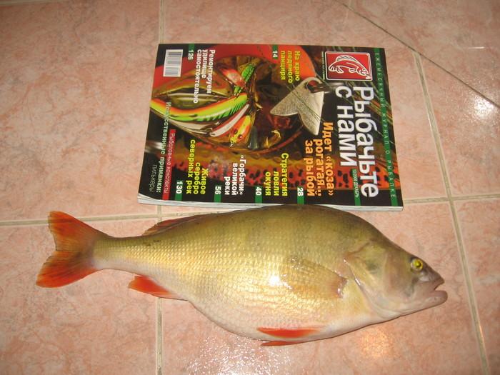 пичуговский окушок 1,5 кг (март 2009)