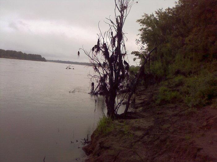 протока. вода упала.