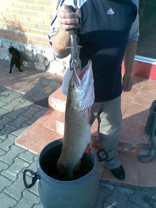 Район Спирино)) Прилов к судаковой рыбалке)))