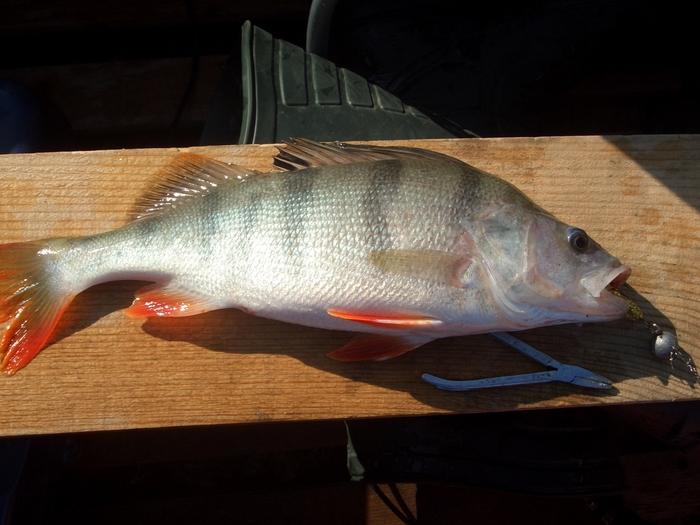Красивая рыбка. 16.08.