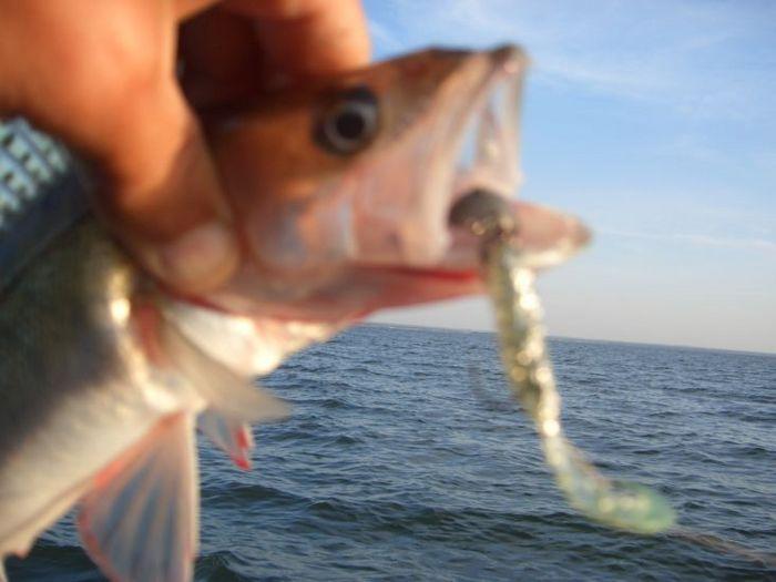 Рыбки все разные. 17.08.